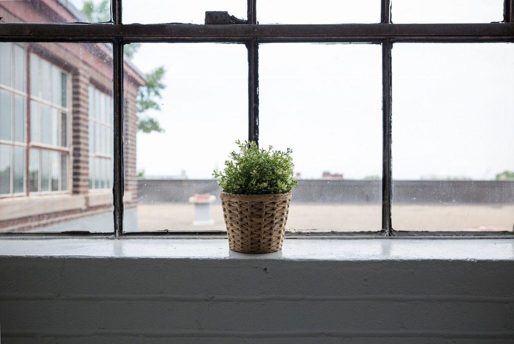 עציץ בחלון